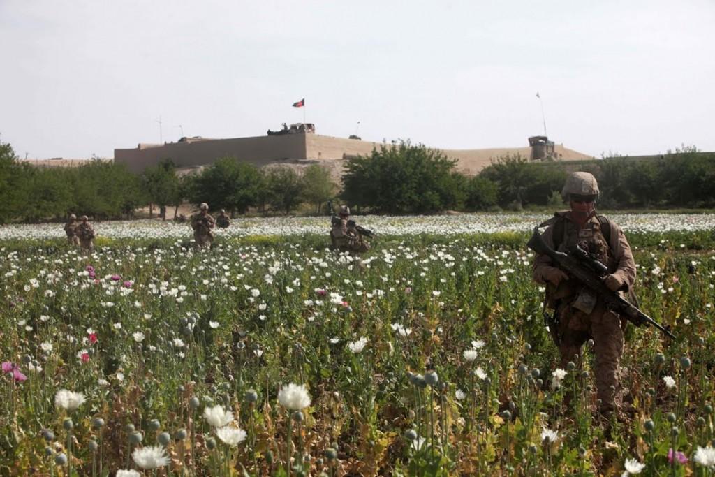 Ein Mohnfeld ganz in der Nähe eines Militärstützpunktes