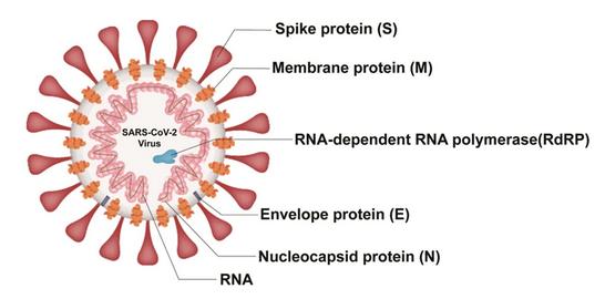 Das E-Gen, das S-Gen und die Nanopartikel